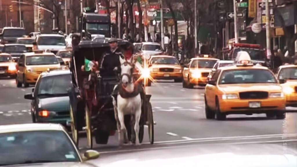 Horse In Traffic