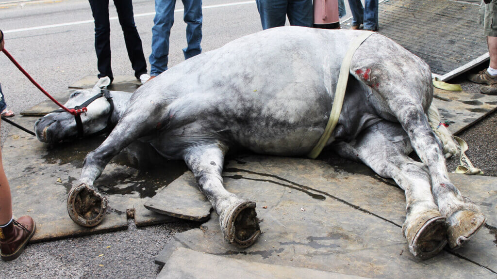 Jerry the Horse Collapsed