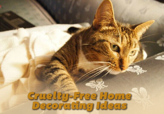 PETALiving-social-cruelty-free-home-decor-cat