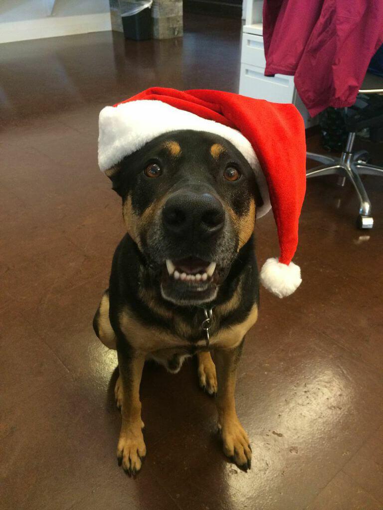 Kiwanis the Dog with Santa Hat