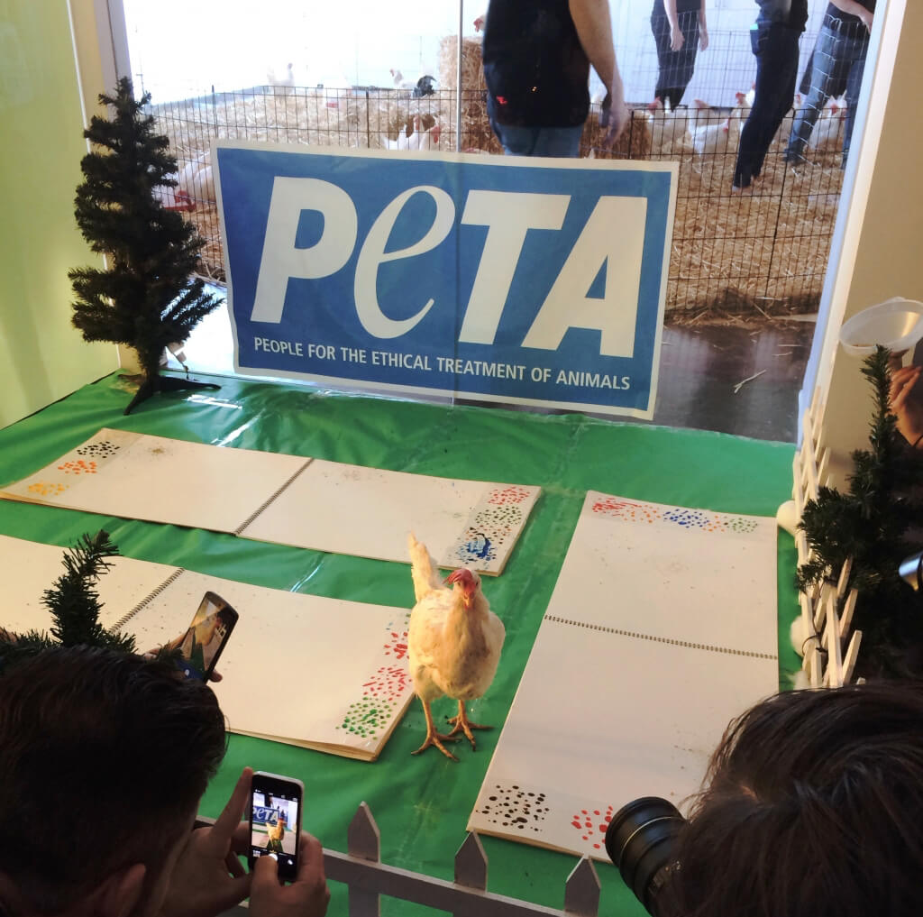 Painting Chickens at PETA Adoption Event