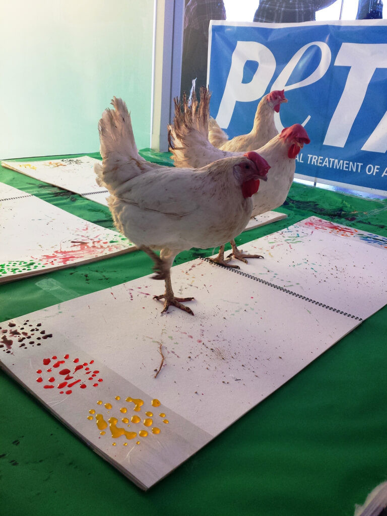 Chickens Painting at PETA Adoption Event