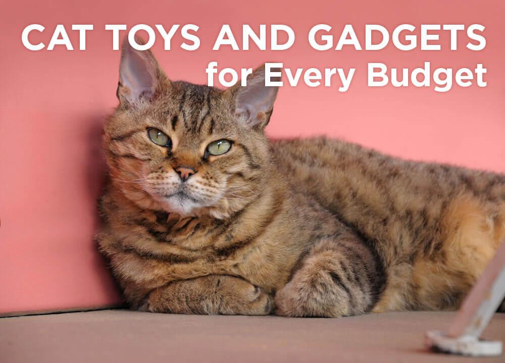 peta-social-cat-toys-gadgets