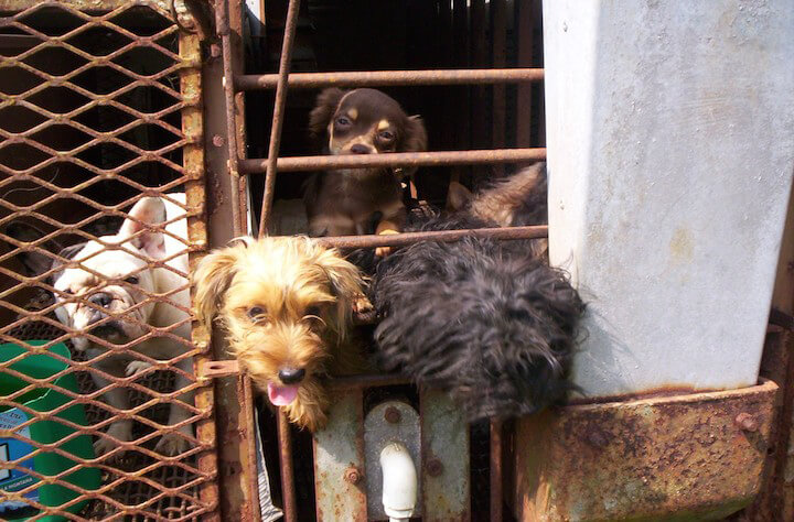 dogs at a puppy mill