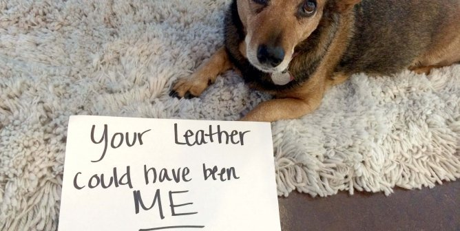 Victory! Choxi.com Bans Leather Gloves After PETA Appeal