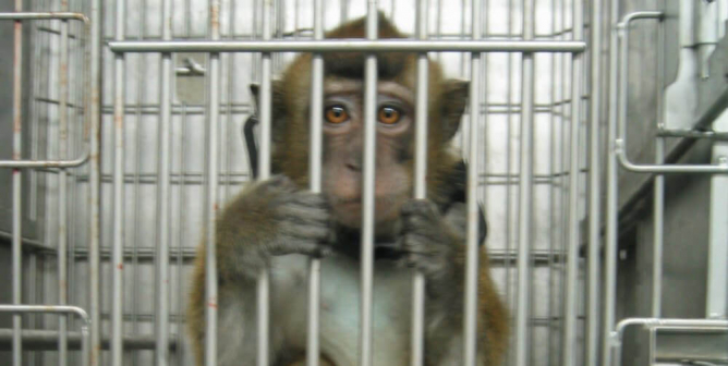 Airline Taking Monkeys to Laboratory Leaves Them Starving, Bloodied