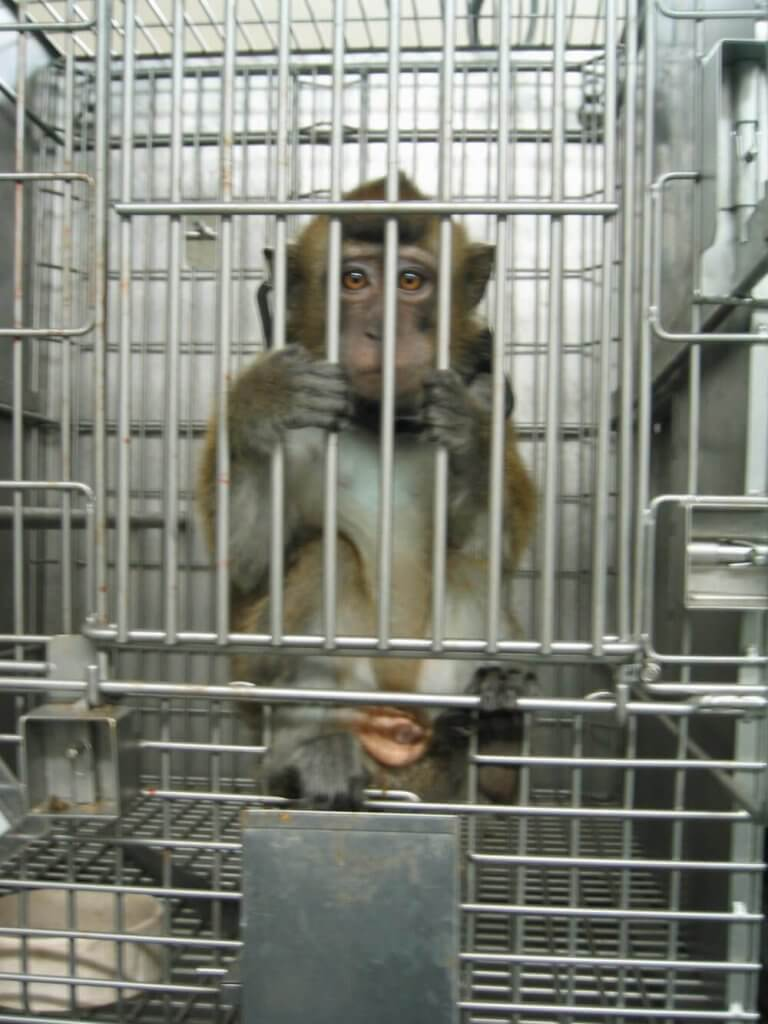 Sad-Looking Monkey in Cage