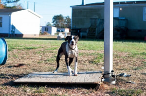 How Your Change Can Help Chained Dogs