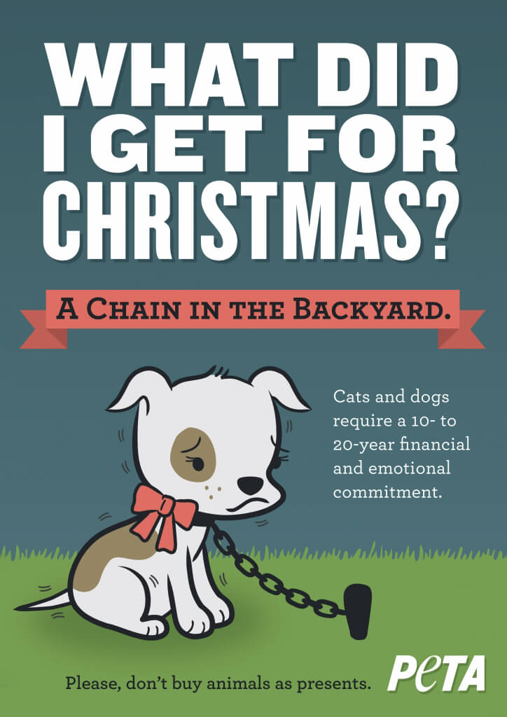 5 Reasons Never To Give A Puppy Or Kitten As A Christmas