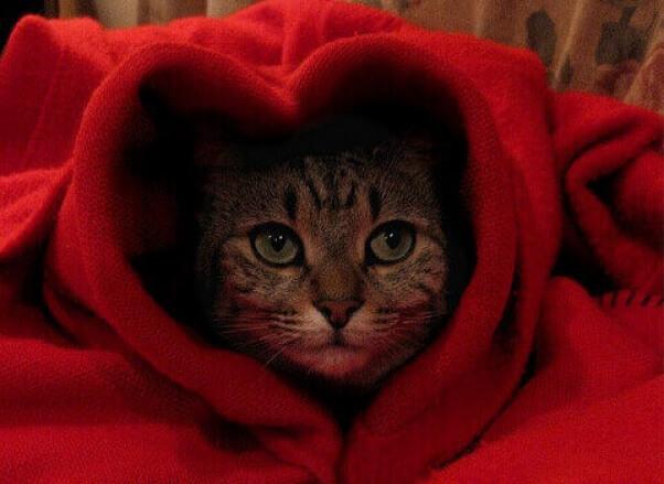 Cat Valentine Heart