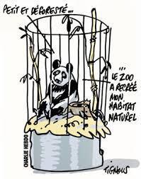 Charlie Hebdo Panda Tignous