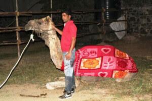 Waheed salvei Camel Vestindo Blanket