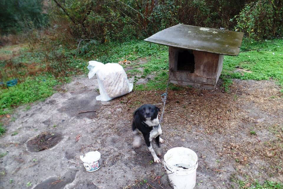 Kora Chained at Her Old Home