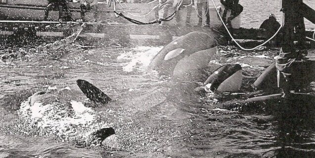 Lolita and Family Being Captured in 1971