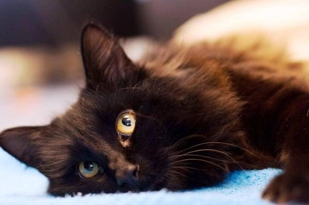 Free to a Good Home' = Death and Despair on Craigslist | PETA