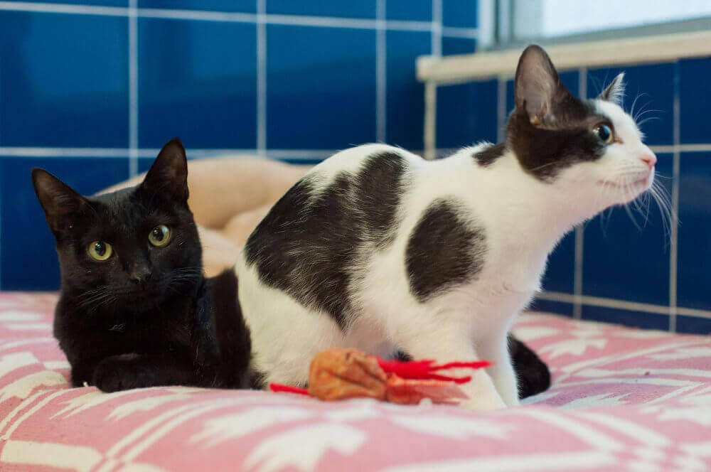 LaVerne and Maxene, Mother and Daughter Cats Available for Adoption