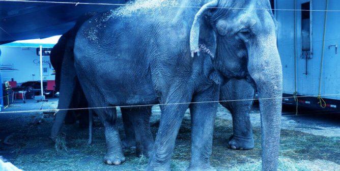 Rare Double Fine for Dangerous Elephant Escape
