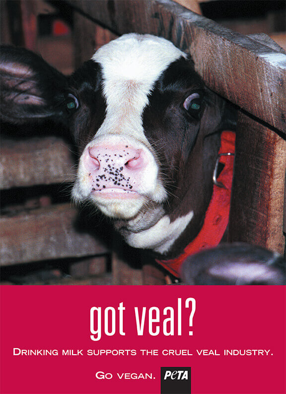 """Got Veal?"" Anti-Dairy Ad 2015"