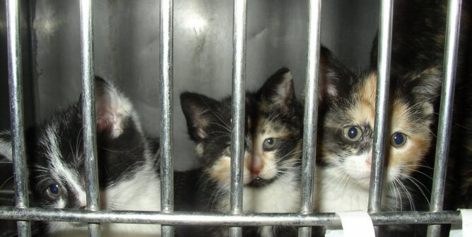 370,000 Reasons to Spay or Neuter