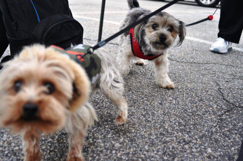 Dogs at PETA Spay Day 2015