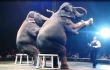 UniverSoul Elephants