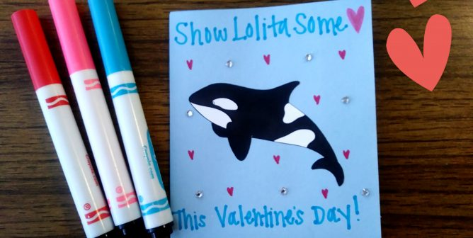Show Love for Orcas This Valentine's Day