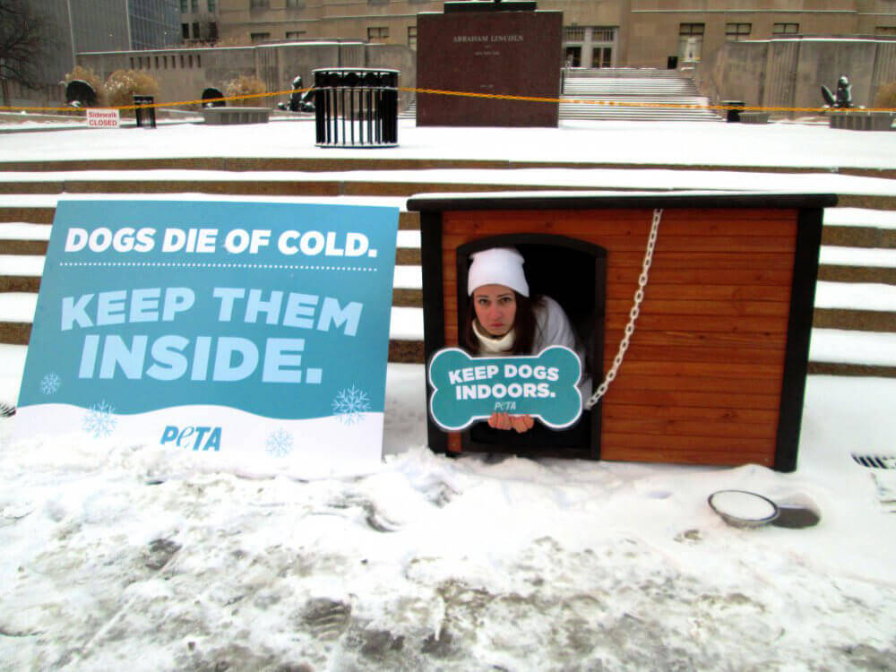 Snow Accumulates as Activist Sits Outside in Doghouse in Freezing Weather