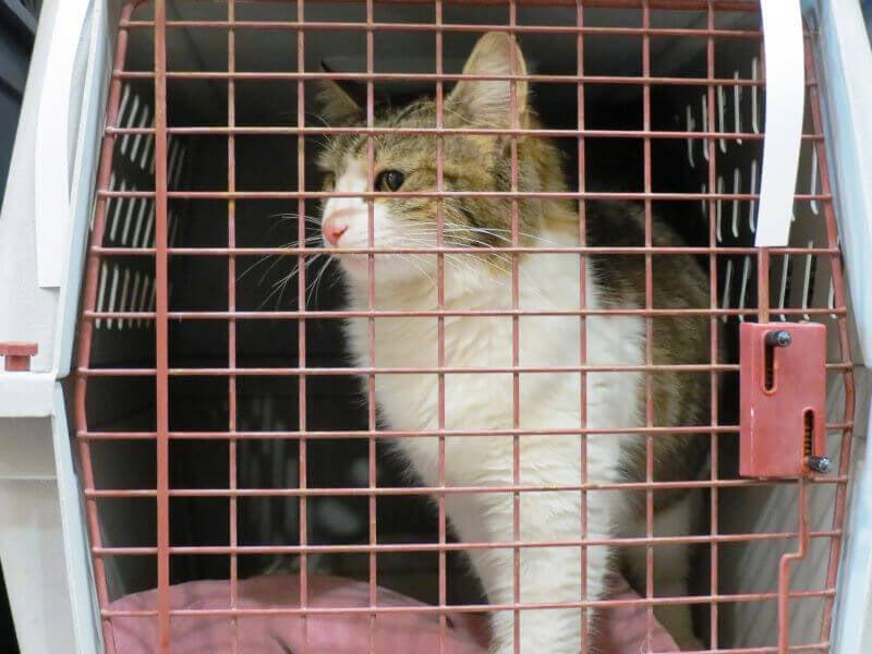 Cat at PETA Spay Day 2015
