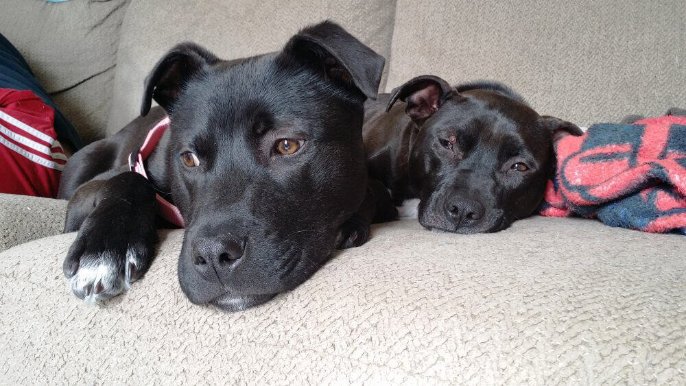 Justice and His Foster Sibling Ellie
