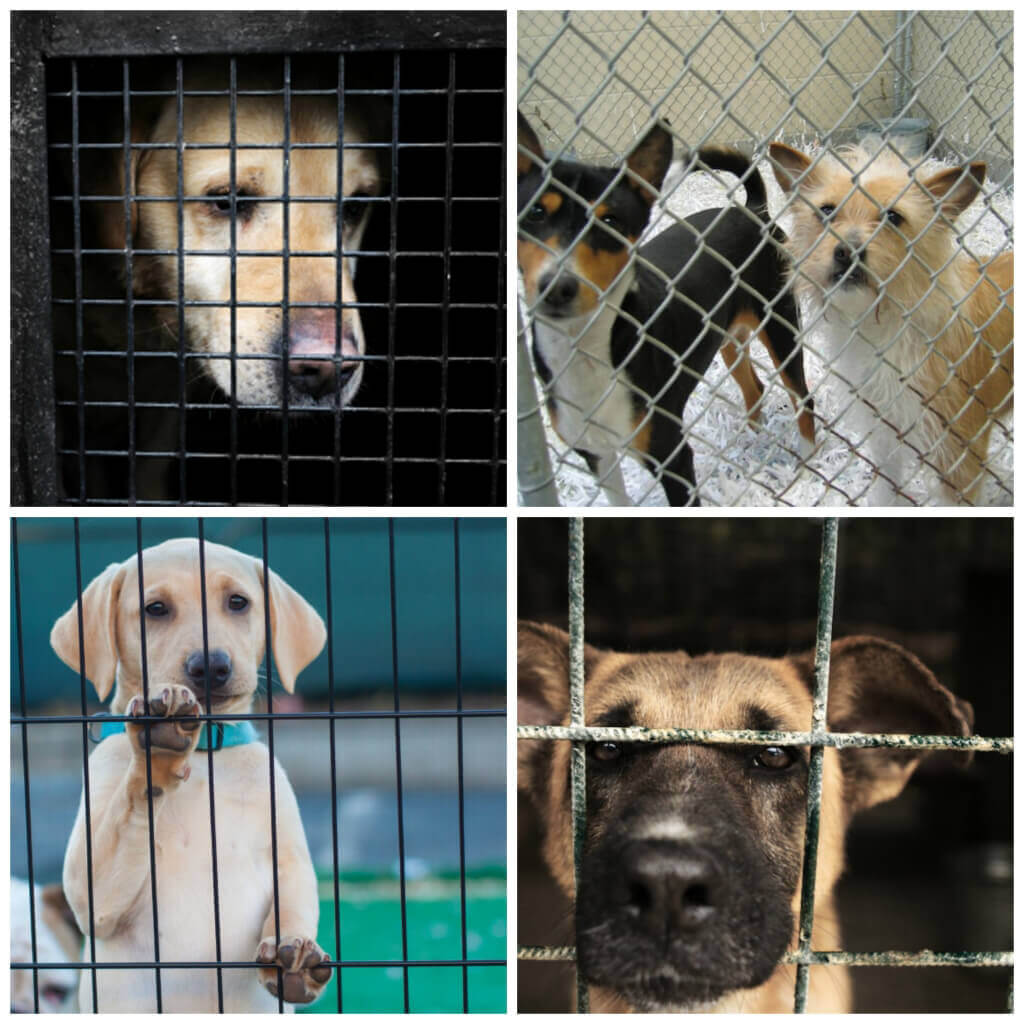 Collage of Shelter Dogs behind Bars
