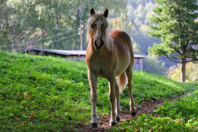 pretty horse
