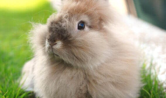 Overstock.com Bans Angora Wool After Prompting From PETA