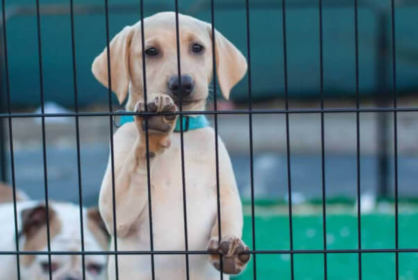 Young Dog in Cage