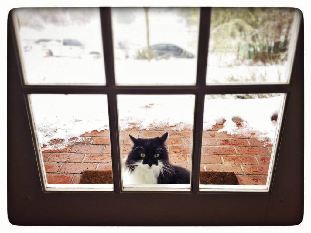Cat Looking In Through Window