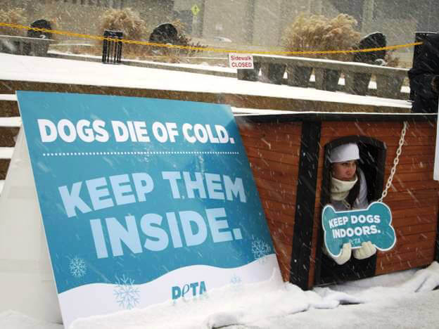Snow Falls as PETA Protester  Demonstrates How Cold Weather Affects Dogs