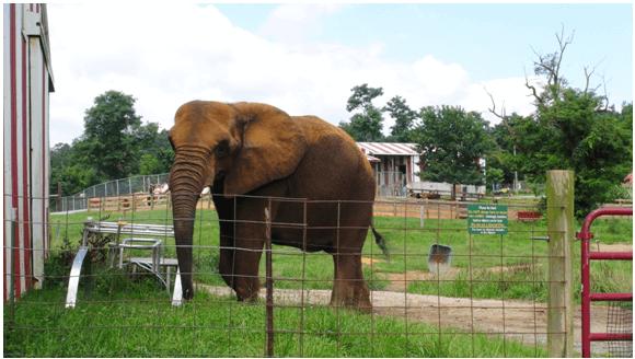 Elephant Alone in Pen