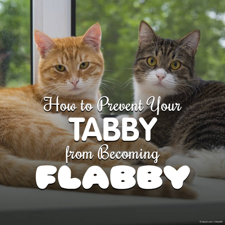 11 Ways to Prevent Your Favorite Feline From Be ing a Fat Cat