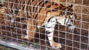 Is There Such a Thing as a Reputable Roadside Zoo? What You Need to Know