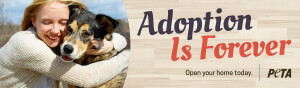 Adoption is forever billboard