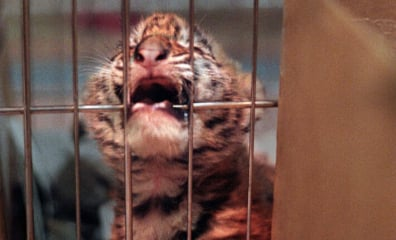 Pledge Never to Go to a Circus That Uses Animals