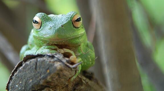 Cute-Green-Frog-1024x649