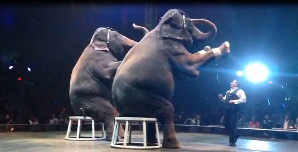 Circuses | PETA