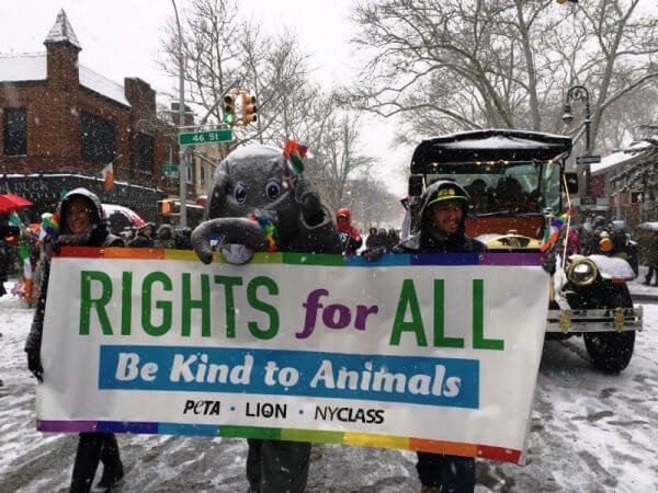PETA's eCarriage in Queens St. Pat's For All Parade