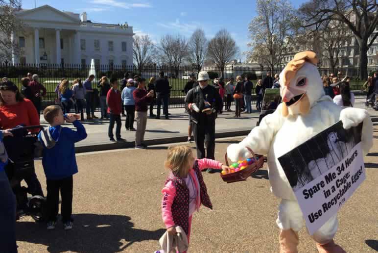 PETA 'Chicken' Visits the White House Easter Egg Roll
