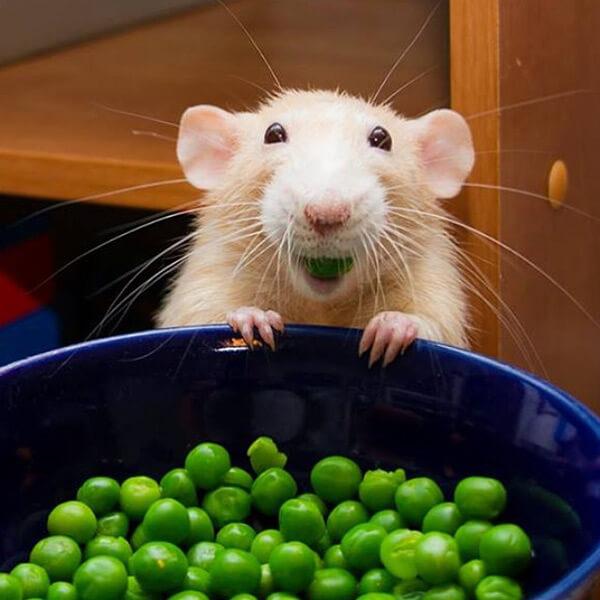 Marty Eats Peas