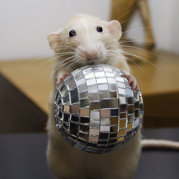 Marty with Disco Ball