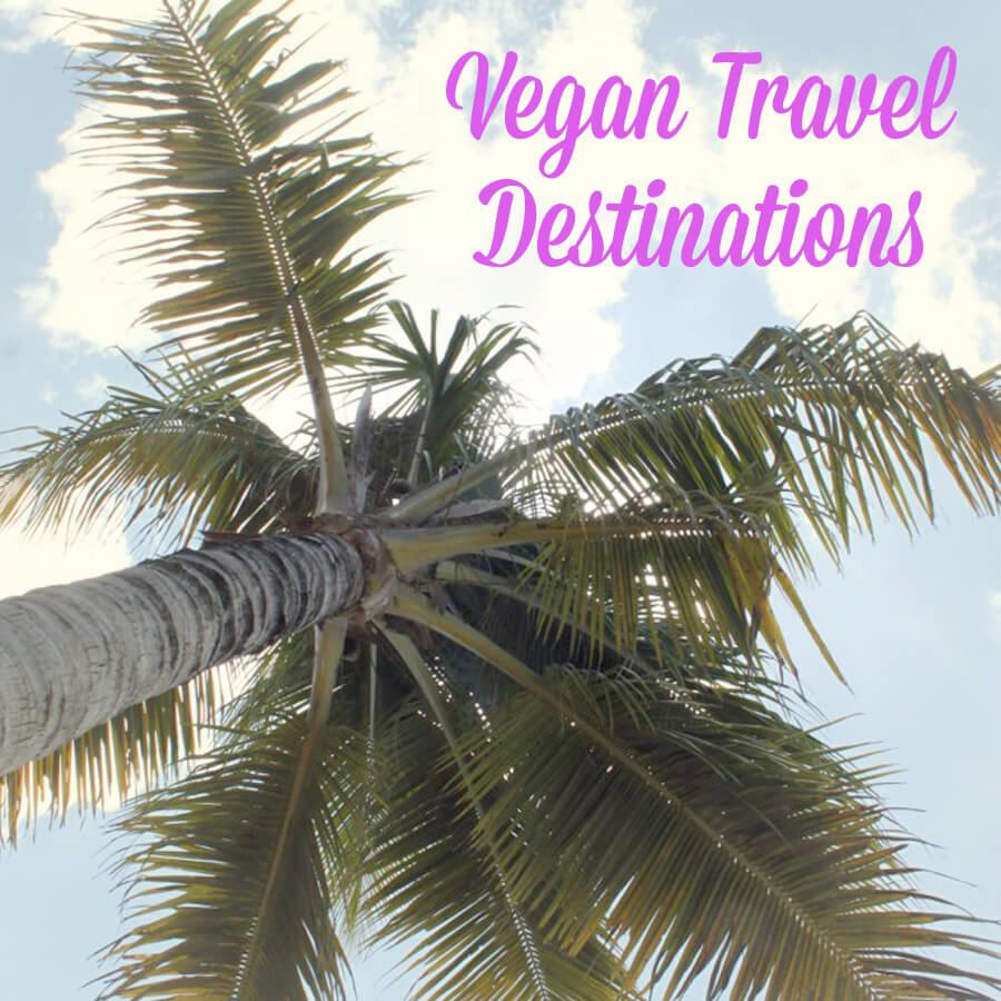 PETALiving-social-vegan-travel-destinations-palm1