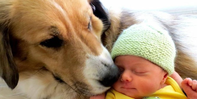 Introducing a New Baby to Your Dog or Cat