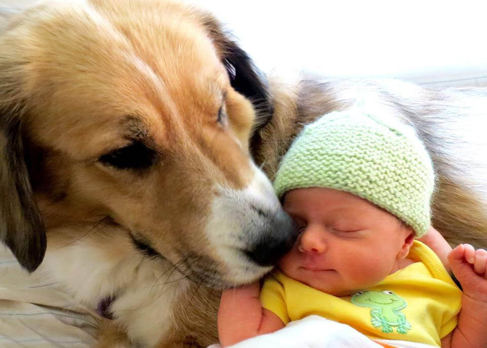 Introducing Your Dog To A New Puppy