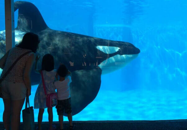 SeaWorld Orca in Tank